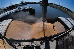 Сообщив об остановке экспорта пшеницы, Украина потеряла крупнейшего импортёра
