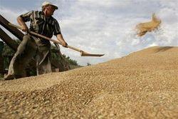 Экспорт российского зерна сократился на 37 процентов