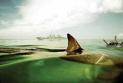 В Севастополе возобновили подготовку боевых дельфинов