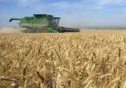 Американская пшеница под конец недели подтянулась, а европейская опять ушла в минус