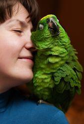 Потерявшийся попугай сообщил полиции свой адрес