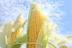 На 5 млн. тонн в текущем году вырос мировой прогноз на производство кукурузы