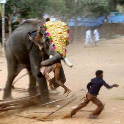 Во время религиозного фестиваля в южной Индии взбесился слон
