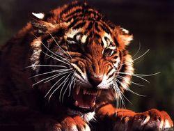 Работницу новосибирского зоопарка загрызли тигры