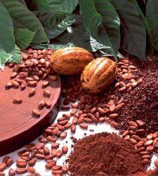 Эксперты: возможно дальнейшее снижение рынка какао