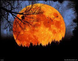 Жители Земли увидели самое яркое лунное шоу