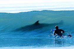 Очередная жертва белой акулы – на пляже в Новой Зеландии