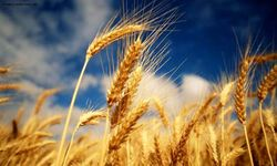 Китай усиленно импортирует зерно и сою