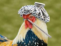 Ученые собираются создать самый страшный штамм птичьего гриппа H5N1
