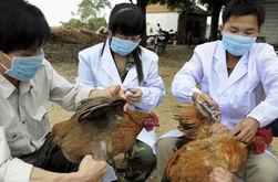 В Китае зафиксировали новый штамм птичьего гриппа у человека