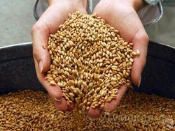 Зерно в предвкушении новогоднего ралли