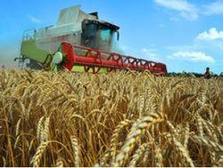 В 2013 году урожай зерновых в Украине достигнет 50 млн. тонн