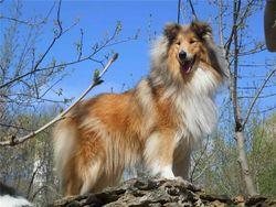 Медики: собаки спасают людей от многих недугов - выводы