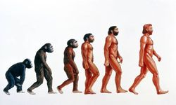 Эволюция человека зависела от изменений климата