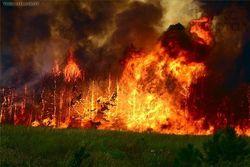 Крупный пожар в национальном парке Сочи