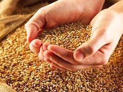 Япония закупит объём пшеницы наибольший за три месяца