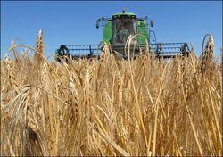 Урожайность не измениться в связи с недавними дождями на Украине