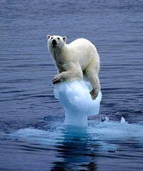 Арктика является наиболее уязвимым местом при глобальном потеплении – МЧС