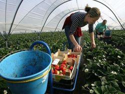 Число гастарбайтеров из Украины будет расти из-за безработицы – нардеп