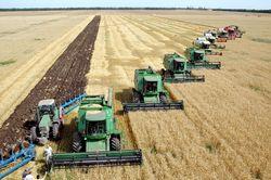 Инвесторам: аграрии Украины сделали ставку на растениеводство