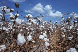На юге Таджикистана предстоит пересев сельхозкультур