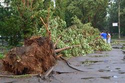 На Харьковщине ураган свалил деревья, остановил авто, убил человека