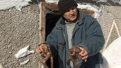 Странности природы в Казахстане: ягненок-мутант с 8 ногами