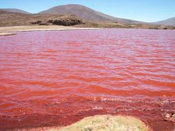 В озере под Челябинском появилась розовая вода - причины