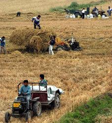 Сельское хозяйство остается в приоритетах грузинских властей