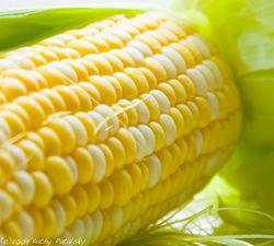 Значительно повысилась стоимость белозёрной кукурузы в Южной Африке