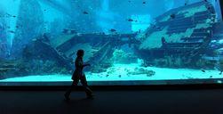 В Сингапуре открылся крупнейший аквариум в мире