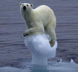 Ежегодный ущерб от глобального потепления – 1,2 триллиона долларов