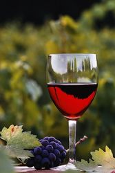 Правительство Молдовы передаст контроль над виноделием частному сектору