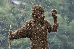 Пчелы насмерть зажалили человека