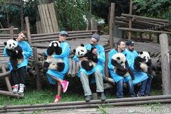 """""""Backstreet Boys"""" пели пандам песни и кормили их бамбуком"""