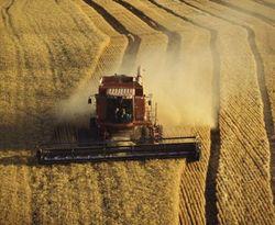 Украинские агрохозяйства нуждаются в рабочей силе