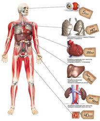 Рекламу о трансплантации запретят, а люди могут написать отказ о заборе органов