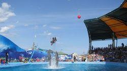 В Кирилловке открылся самый большой в Украине дельфинарий