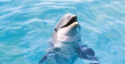 В Севастопольском дельфинарии из-за рейдеров нет денег на корм питомцам