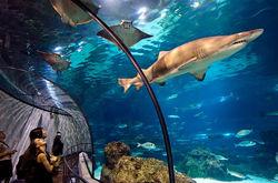 """В зоопарке сделают частную """"тюрьму"""" для дельфинов"""