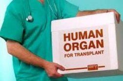 Японские ученые планируют выращивать органы для людей в животных