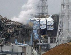 Из-за аварии на «Фукусиме» в Японии появляются животные и растения-мутанты