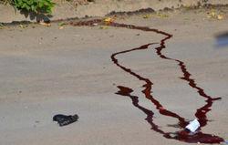 Найден убитым владелец авто, на котором напали на инкассаторов в Николаеве