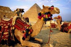 Число отдыхающих за рубежом россиян выросло на четверть – спасибо Египту