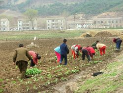 Реформы в КНДР: Крестьяне будут сами продавать часть урожая
