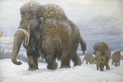 Международная экспедиция нашла в Якутии живые клетки мамонта