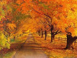 Прошедший октябрь был одним из самых теплых за последние полтора века