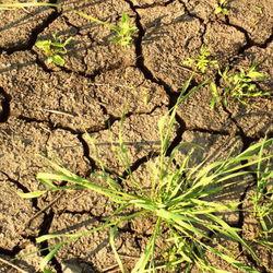 Минсельхоз должен предложить меры поддержки АПК регионов, где наблюдается сильная засуха