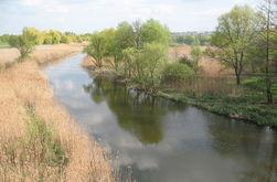 В реке Уды под Харьковом массово гибнет рыба
