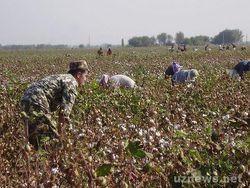 МОТ хочет послать в Узбекистан экспертов на сбор хлопка